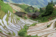 Longsheng Rice Terraces; China stock image