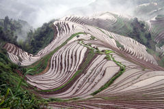 Longsheng Rice Terraces; China Royalty Free Stock Photography