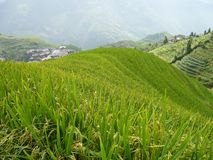 Longsheng Rice Terraces, China Royalty Free Stock Photography