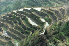 Longsheng rice terraces, China Royalty Free Stock Photo