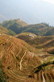 Longsheng Rice Terraces, China Stock Image