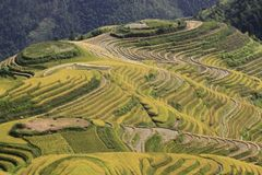 The yellow green Longsheng Rice Terraces Dragon`s Backbone also known as Longji Rice Terraces stock photo