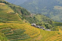 The Longsheng Rice Terraces Dragon`s Backbone also known as Longji Rice Terraces. a stock image
