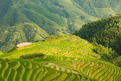 Longsheng rice terraces guilin china landscape Royalty Free Stock Photography
