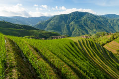 Longsheng rice terraces guilin china landscape Stock Images