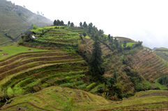 Longsheng Rice Terraces Royalty Free Stock Image