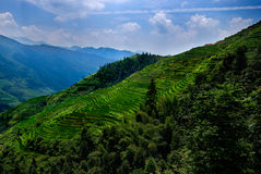 Longsheng Rice Terraces. Slopes of the Longsheng Rice Terraces Royalty Free Stock Photo