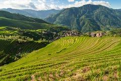 Longsheng ris terrasserar guilin porslinlandskap Arkivfoto
