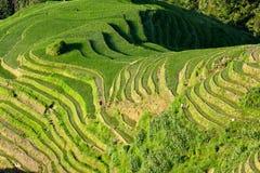 Longsheng ryż tarasów krajobraz w Chiny zdjęcia stock