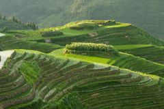 Longsheng ryż tarasów krajobraz w Chiny obrazy royalty free