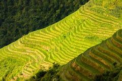 Longsheng ryż tarasów krajobraz w Chiny obraz stock