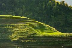 Longsheng ryż tarasów krajobraz w Chiny fotografia royalty free