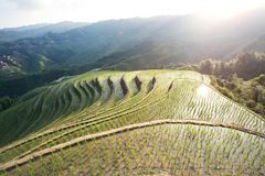 Terraced fields. Longsheng terraced fields in guangxi china royalty free stock photo
