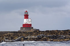 Longstone Lighthouse and seals Royalty Free Stock Images