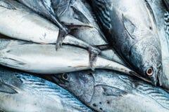 在市场上的Longtail金枪鱼 免版税库存图片