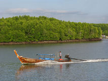 Longtail boat and mangrove forest Royalty Free Stock Photo