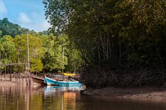 Longtail fartyg i mangroveskogen Koh Lanta, Krabi, Thailand Arkivfoton