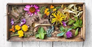 Longue affiche avec les herbes saines Images stock