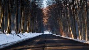 Longue allée avec la neige de Hongrie Images stock