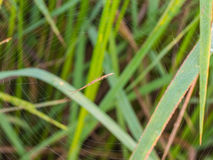 Longue araignée Images libres de droits