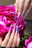 Longue belle manucure avec des fleurs sur les doigts femelles Conception de clous Plan rapproché Image stock