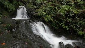Longue entrée de l'eau d'exposition de Dell Falls de Shepperd dans l'Orégon le long de la gorge du fleuve Columbia avec l'audio 1 banque de vidéos