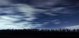 Longue file des silhouettes d'arbres contre le contexte du ciel nocturne Photos libres de droits