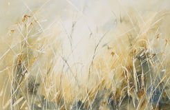 Longue herbe dans un pré photo libre de droits