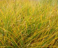 Longue herbe verte en automne Photo stock