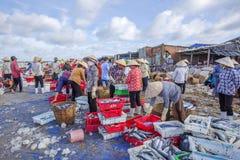 Longue plage de Hai, poissonnerie image stock