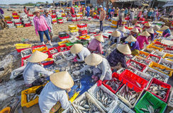 Longue plage de Hai, poissonnerie images stock