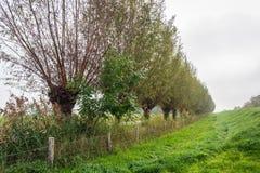 Longue rangée des saules d'arbre étêté au fond d'une digue un jour brumeux d'automne images libres de droits