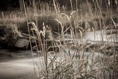 Longue rivière de Yampa d'exposition de sépia Photographie stock