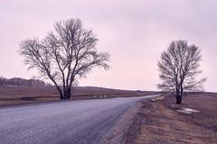 Longue route Arbres sur le bord de la route Photo stock