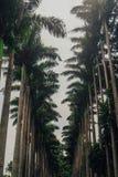 Longue route Camino Largo La Laguna, Ténérife de San Cristobal De Photographie stock libre de droits