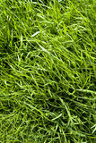 Longue texture d'herbe Photographie stock