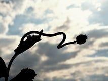 Longue tige sèche de clou de girofle Champ de soirée des têtes de pavot Images libres de droits