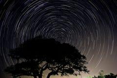 Longue traînée d'étoile d'exposition d'un arbre de chêne vivant en Caroline du Nord photo stock