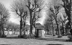 Longues branches à de hauts arbres photo libre de droits