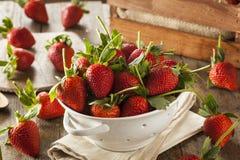 Longues fraises organiques crues de tige Photos stock