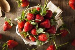 Longues fraises organiques crues de tige Photographie stock