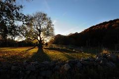 Longues ombres de chêne Images libres de droits