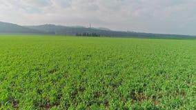 Longueur aérienne d'un champ de blé vert en Israël du nord banque de vidéos