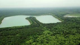 Longueur aérienne de bourdon, volant en avant au-dessus des lacs et de la forêt, Vue aérienne de beau paysage banque de vidéos