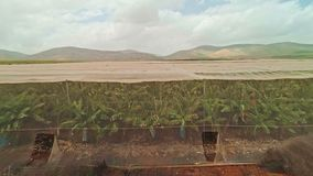Longueur aérienne des maisons nettes avec des plantations de banane clips vidéos