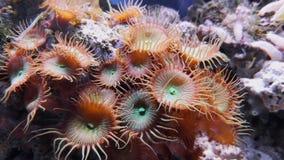 Longueur de fond marin, algues et récifs, poissons de natation dans l'aquarium clips vidéos