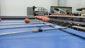 Longueur sur la chaîne de production d'oeufs avec le traitement de évaluation d'oeufs clips vidéos