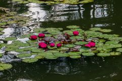 Longwood庭院-都市庭院 免版税库存图片
