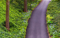 看下来一条森林地道路在Longwood庭院里, PA 免版税图库摄影