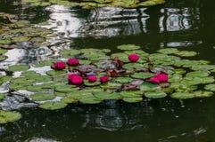 Longwood trädgårdar - Urban trädgård royaltyfri bild